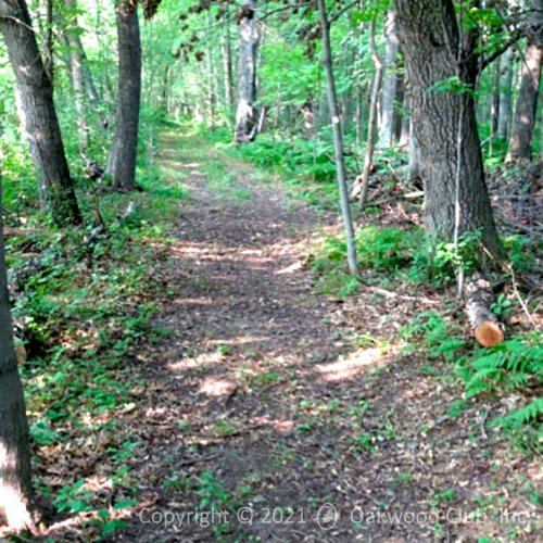 Walking.Trail_04